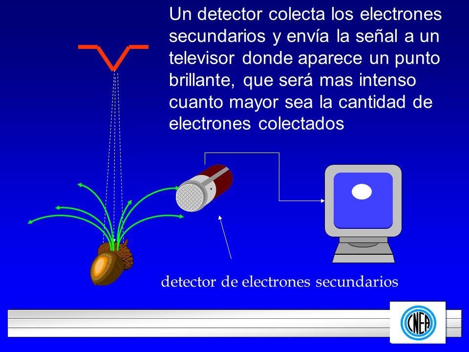 Un detector colecta los electrones secundarios y envía la señal a un televisor donde aparece un punto brillante, que será mas intenso cuanto mayor sea la cantidad de electrones colectados