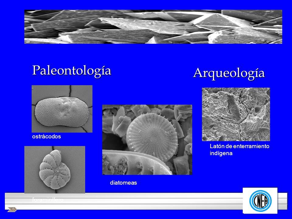Paleontología Arqueología ostrácodos Latón de enterramiento indígena