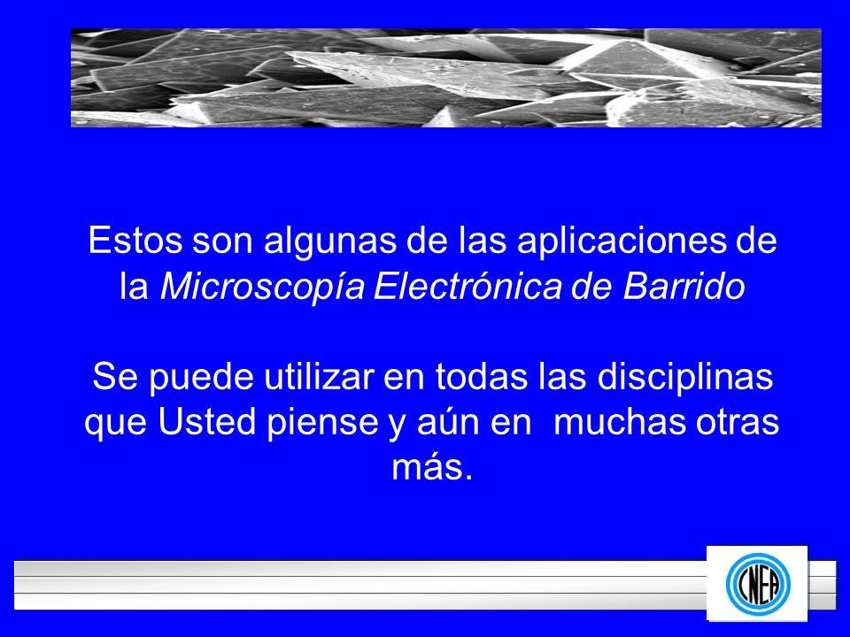Estos son algunas de las aplicaciones de la Microscopía Electrónica de Barrido