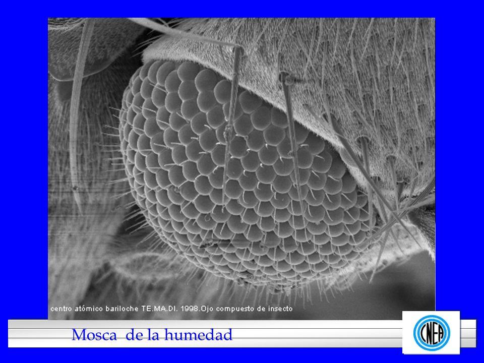 Imagen de la mosca de letrina