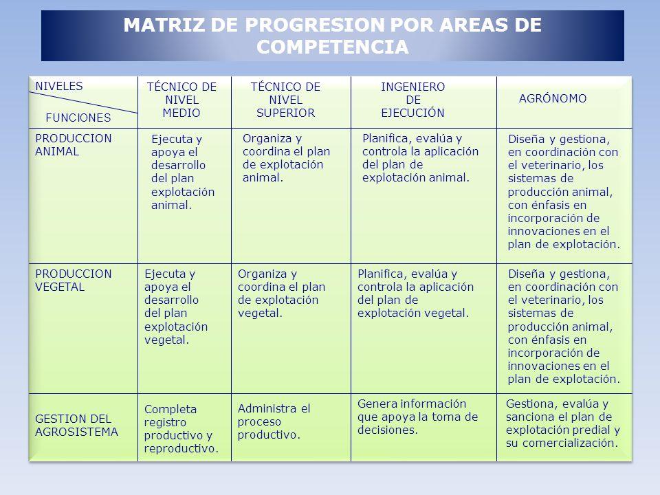MATRIZ DE PROGRESION POR AREAS DE COMPETENCIA