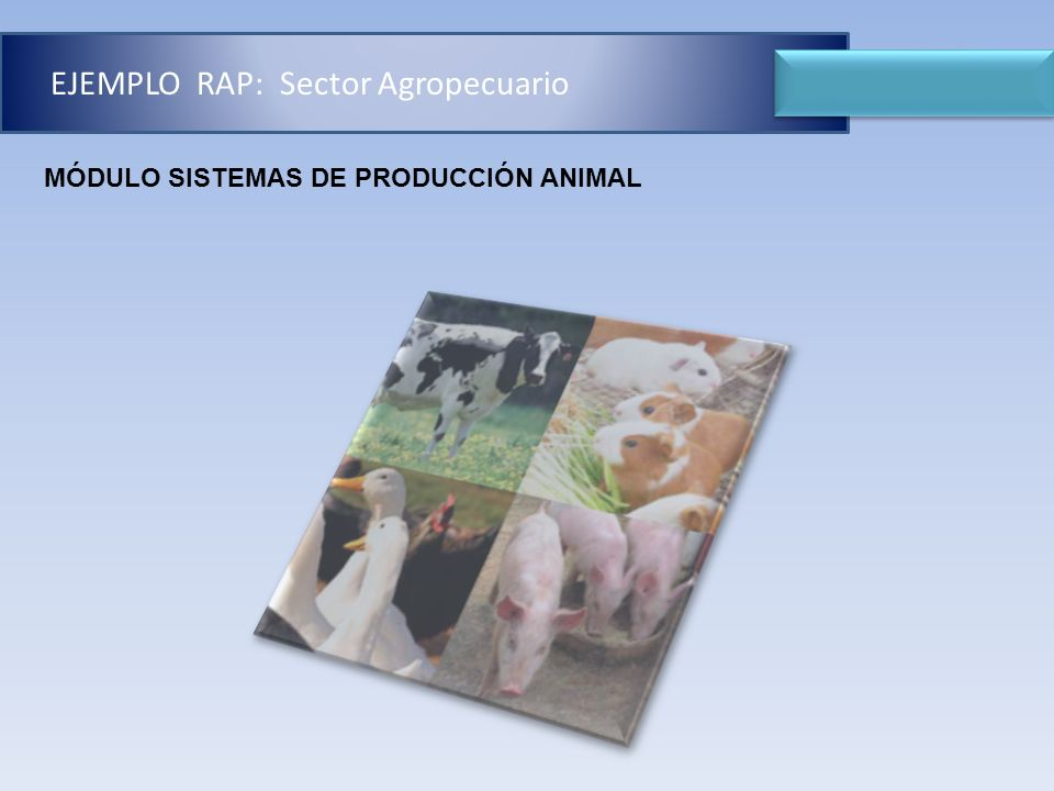 EJEMPLO RAP: Sector Agropecuario