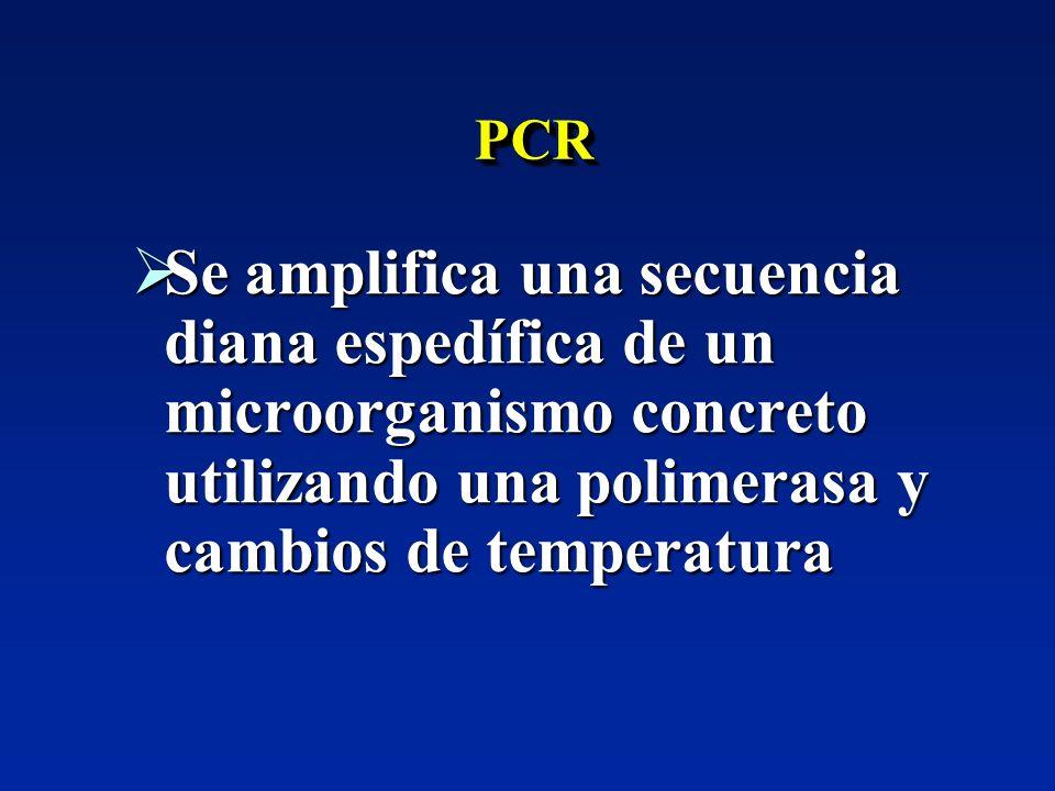 PCR Se amplifica una secuencia diana espedífica de un microorganismo concreto utilizando una polimerasa y cambios de temperatura.