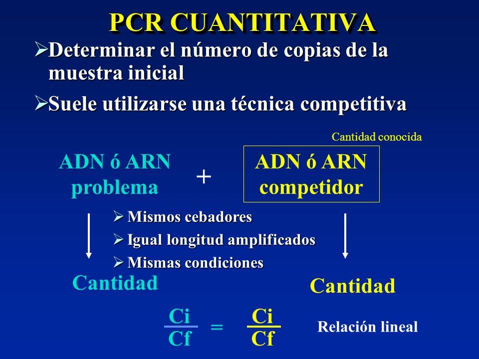 PCR CUANTITATIVA Determinar el número de copias de la muestra inicial. Suele utilizarse una técnica competitiva.