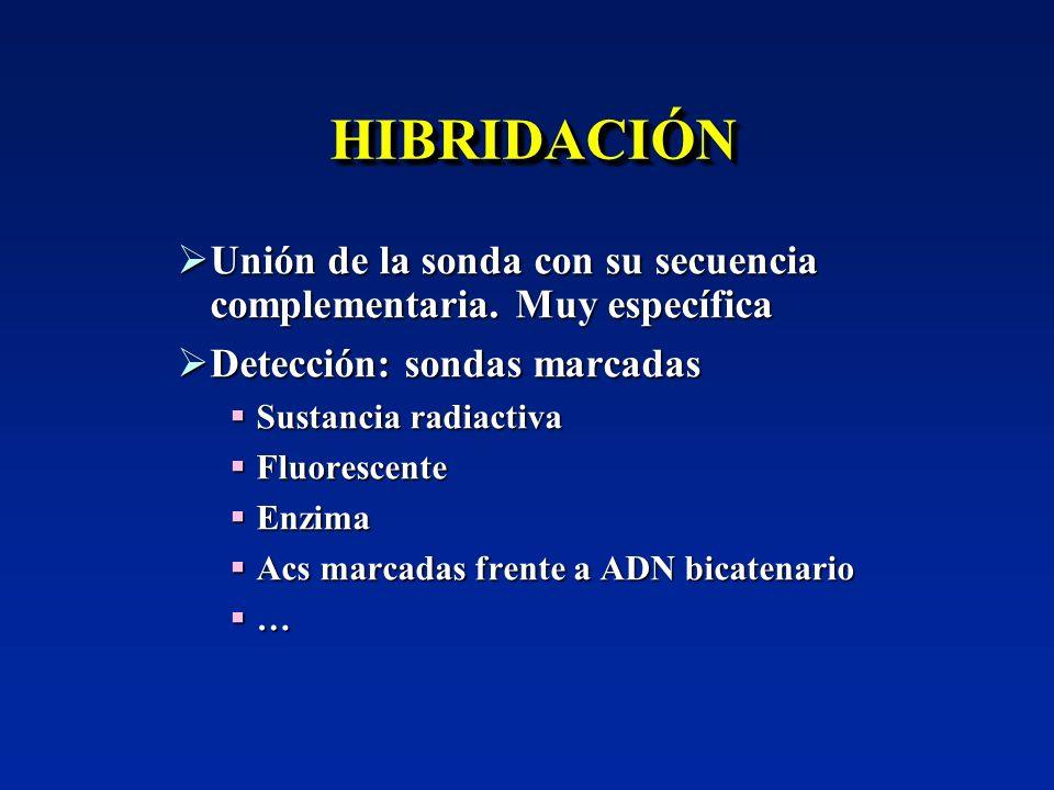 HIBRIDACIÓN Unión de la sonda con su secuencia complementaria. Muy específica. Detección: sondas marcadas.
