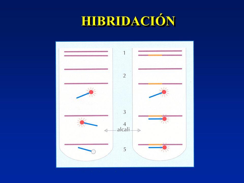 HIBRIDACIÓN