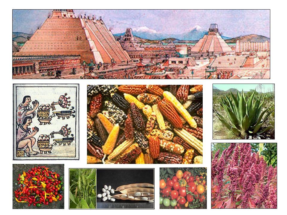 En nuestro hemisferio se encuentran dos importantes centros de domesticación de plantas que llegaron a ser cunas mundiales de la agricultura y la civilización: Mesoamérica y la Región Andina.