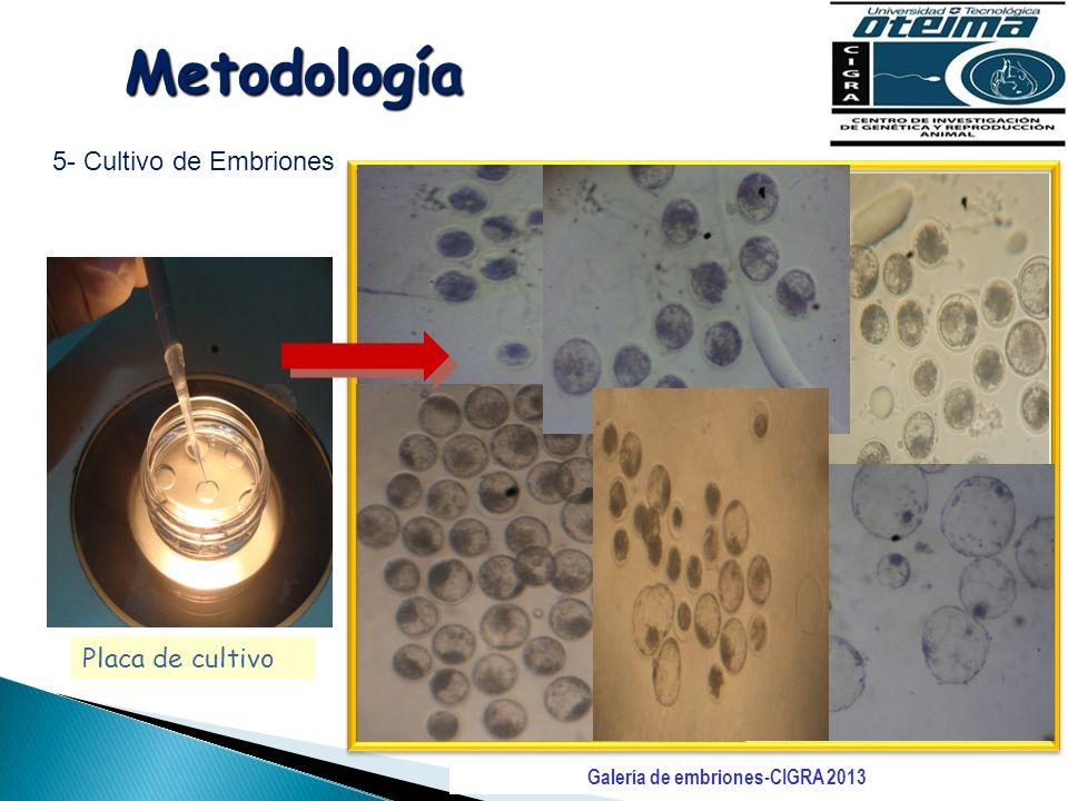 Galería de embriones-CIGRA 2013