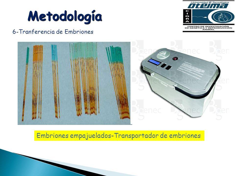 Metodología Embriones empajuelados-Transportador de embriones