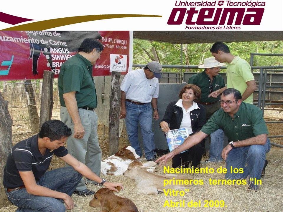 Nacimiento de los primeros terneros In Vitro