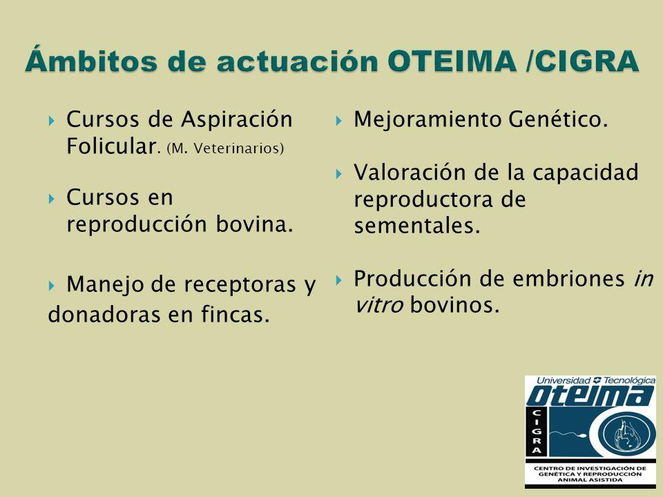 Ámbitos de actuación OTEIMA /CIGRA