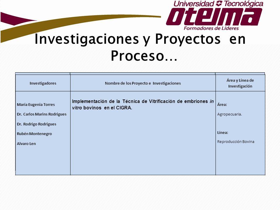 Investigaciones y Proyectos en Proceso…