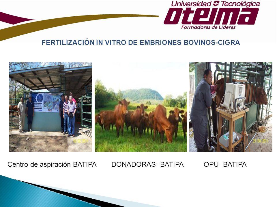 FERTILIZACIÓN IN VITRO DE EMBRIONES BOVINOS-CIGRA