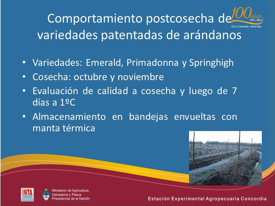 Comportamiento postcosecha de variedades patentadas de arándanos