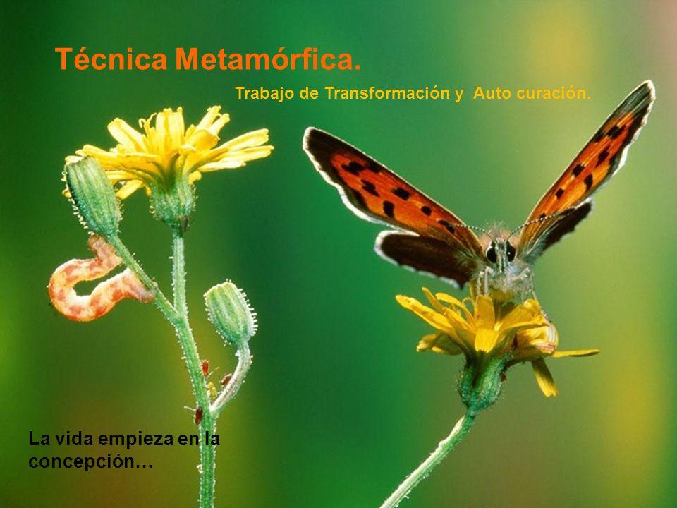 Técnica Metamórfica. La vida empieza en la concepción…