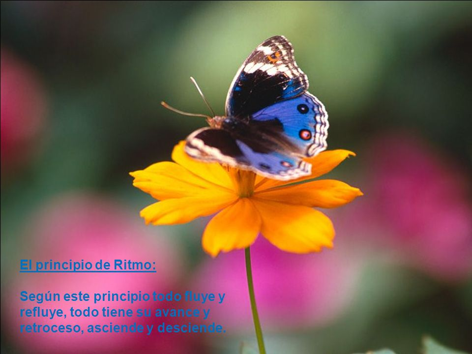 El principio de Ritmo: Según este principio todo fluye y refluye, todo tiene su avance y.