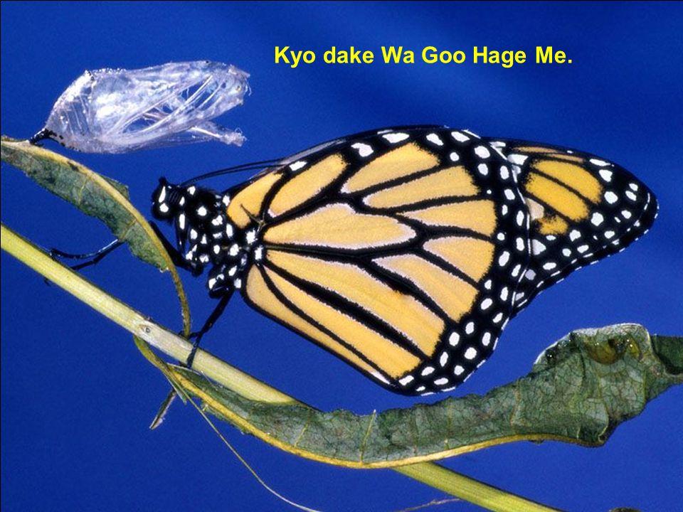 D Kyo dake Wa Goo Hage Me.