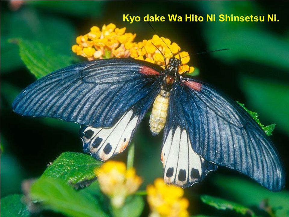 Kyo dake Wa Hito Ni Shinsetsu Ni.
