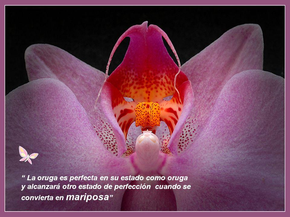 La oruga es perfecta en su estado como oruga y alcanzará otro estado de perfección cuando se convierta en mariposa