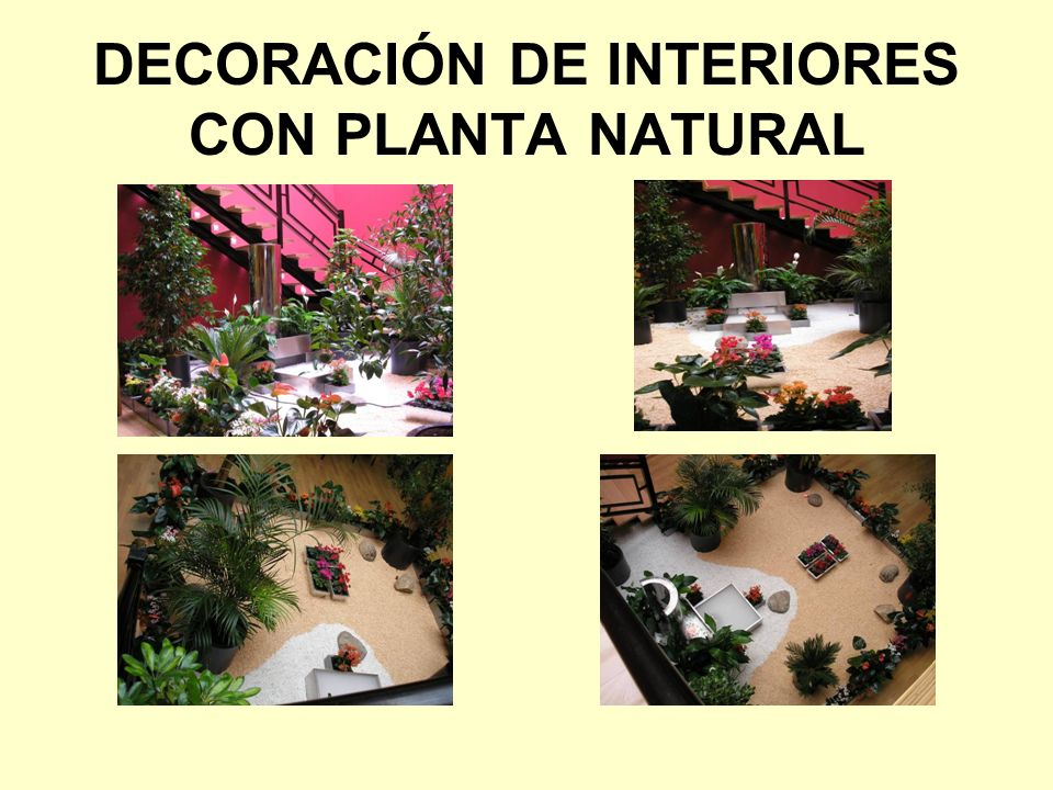 DECORACIÓN DE INTERIORES CON PLANTA NATURAL