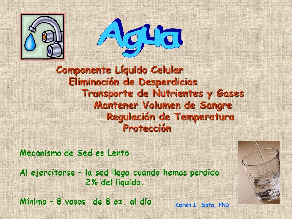 Agua Componente Líquido Celular Eliminación de Desperdicios