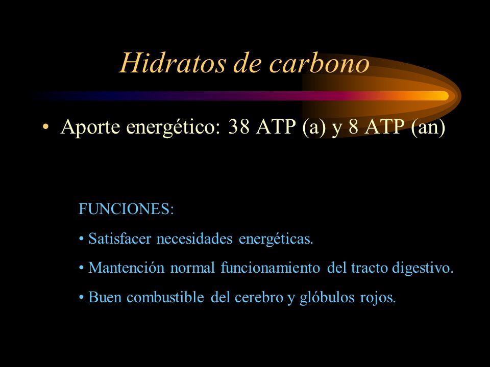 Hidratos de carbono Aporte energético: 38 ATP (a) y 8 ATP (an)