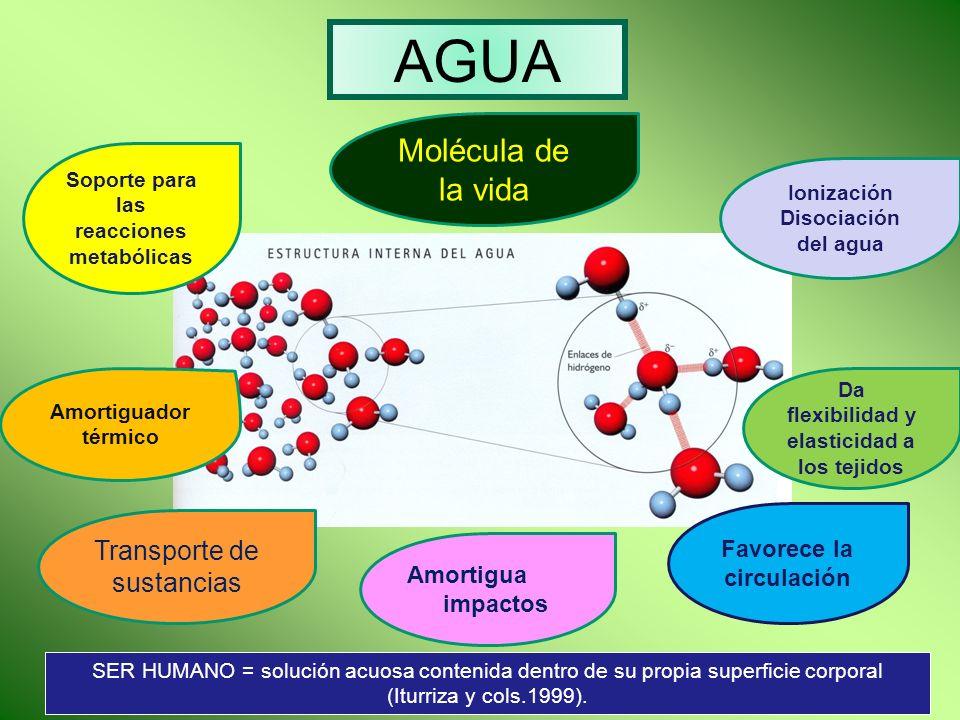 AGUA Molécula de la vida Transporte de sustancias
