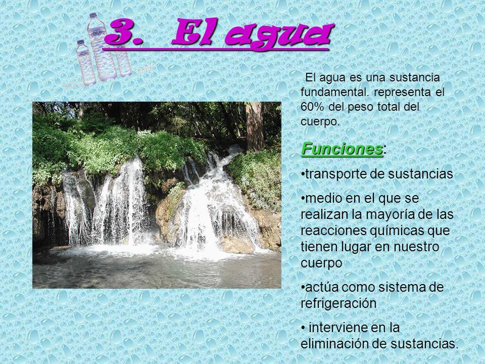 3. El agua Funciones: transporte de sustancias