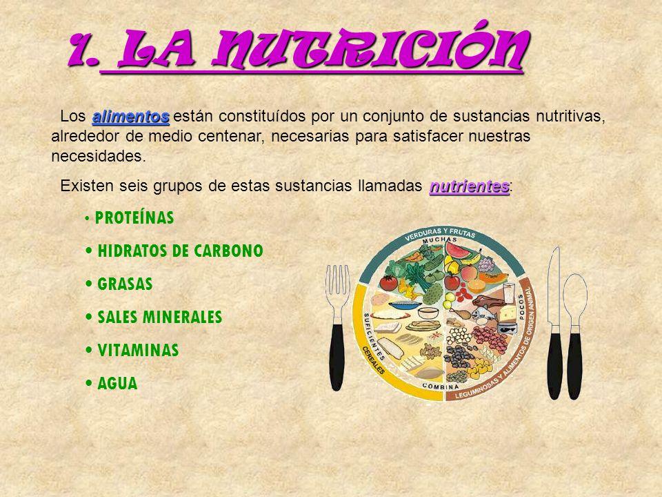LA NUTRICIÓN HIDRATOS DE CARBONO GRASAS SALES MINERALES VITAMINAS AGUA