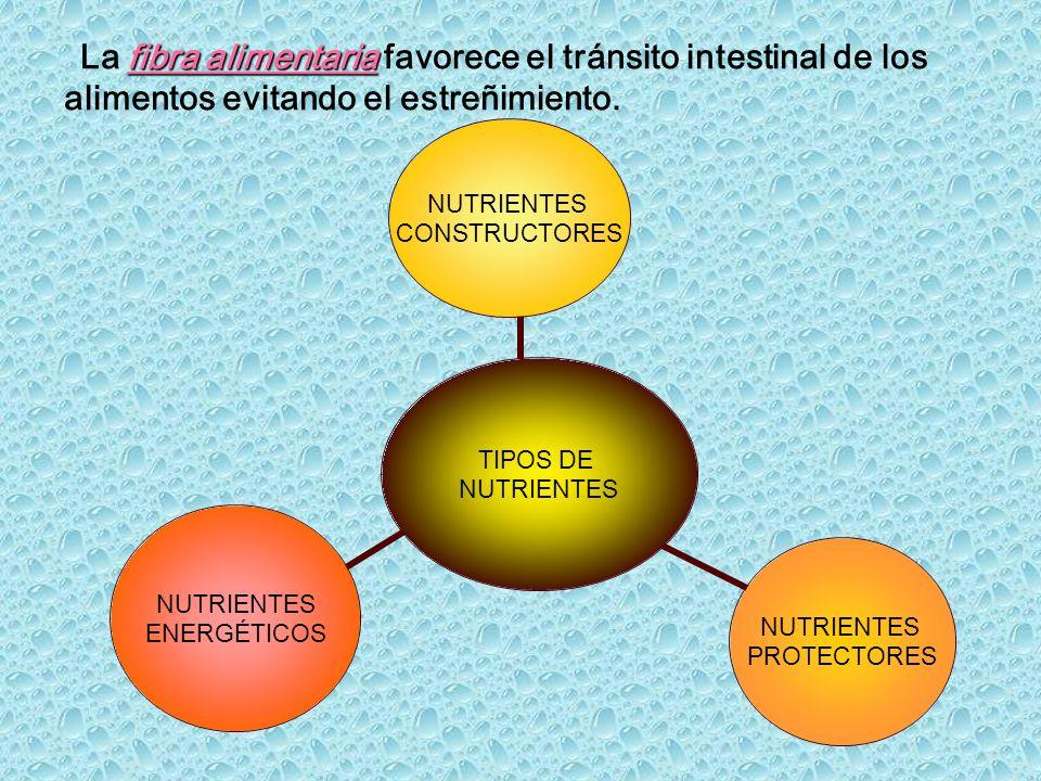 La fibra alimentaria favorece el tránsito intestinal de los alimentos evitando el estreñimiento.