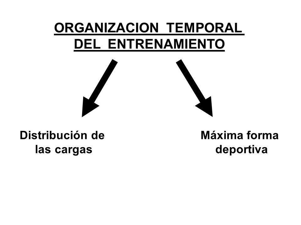 ORGANIZACION TEMPORAL