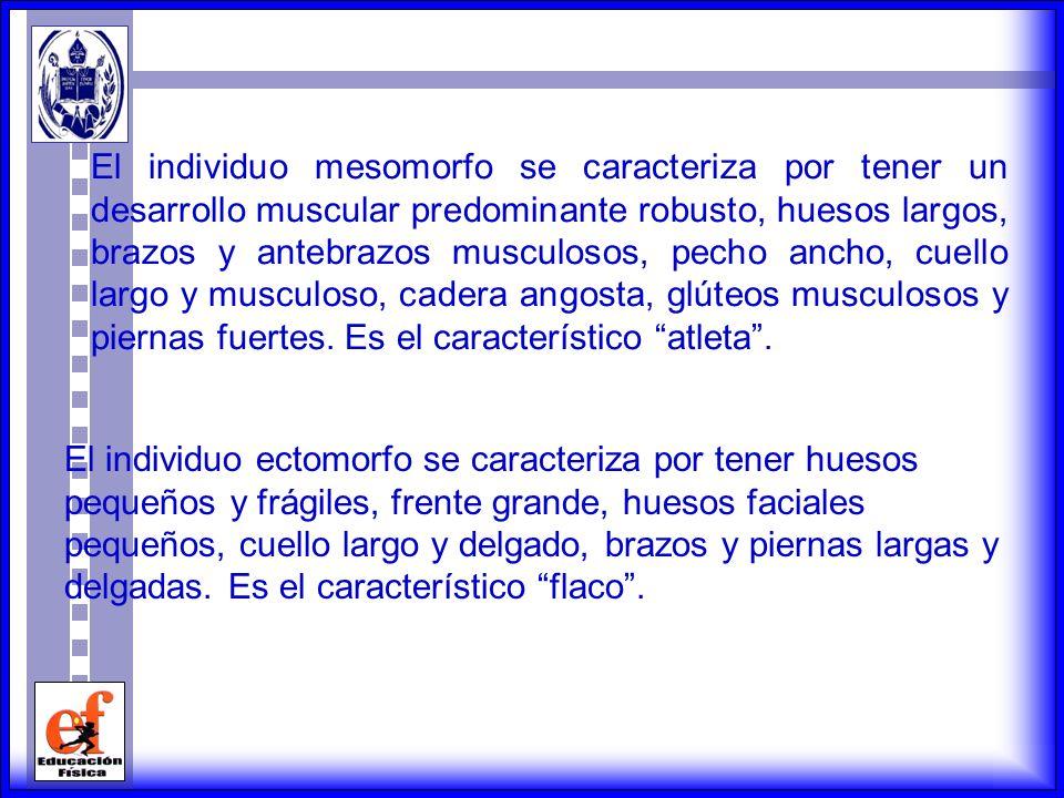 El individuo mesomorfo se caracteriza por tener un desarrollo muscular predominante robusto, huesos largos, brazos y antebrazos musculosos, pecho ancho, cuello largo y musculoso, cadera angosta, glúteos musculosos y piernas fuertes. Es el característico atleta .
