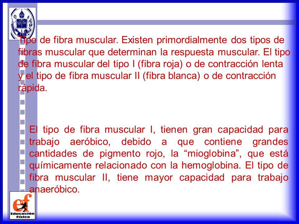 Tipo de fibra muscular. Existen primordialmente dos tipos de fibras muscular que determinan la respuesta muscular. El tipo de fibra muscular del tipo I (fibra roja) o de contracción lenta y el tipo de fibra muscular II (fibra blanca) o de contracción rápida.