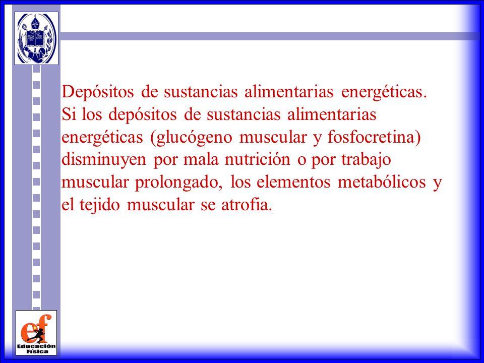 Depósitos de sustancias alimentarias energéticas