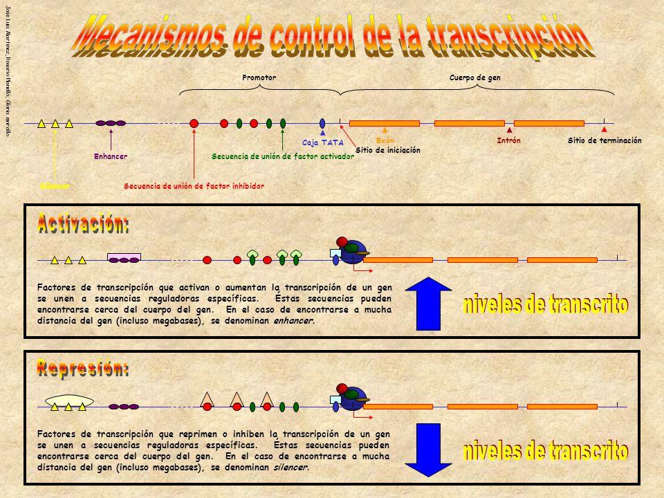 Mecanismos de control de la transcripción