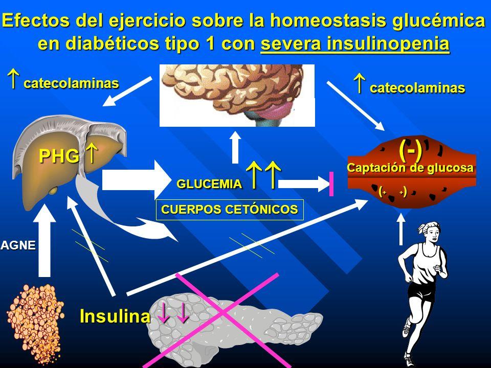 (-)  catecolaminas  catecolaminas