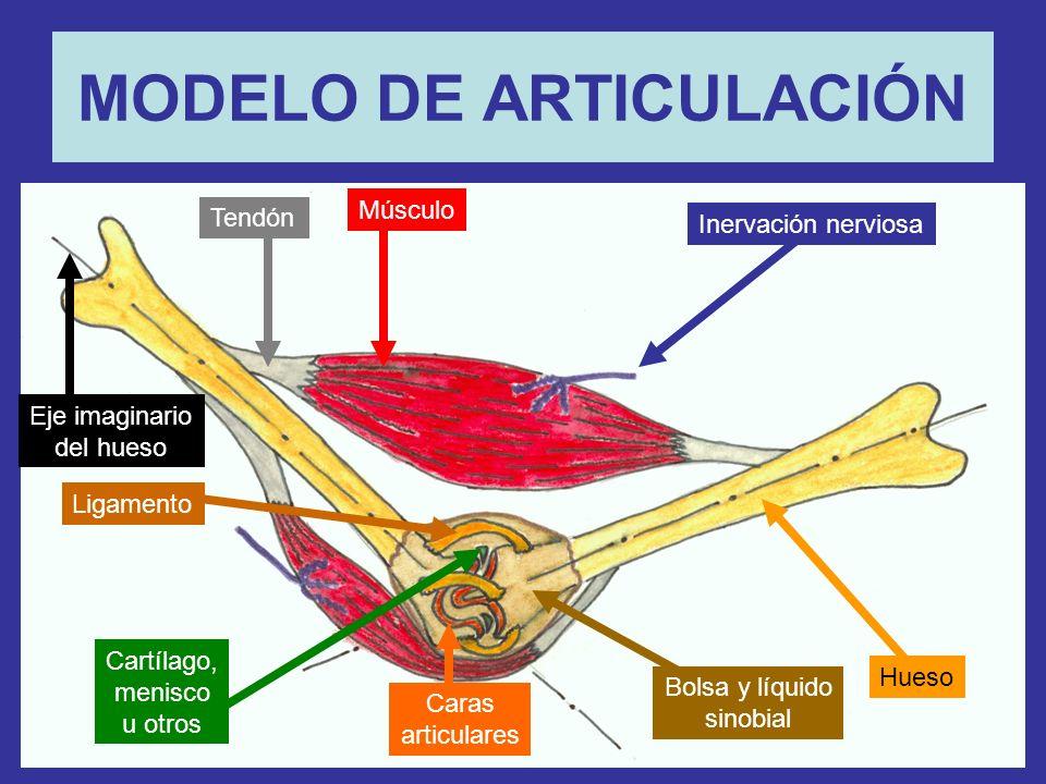 MODELO DE ARTICULACIÓN