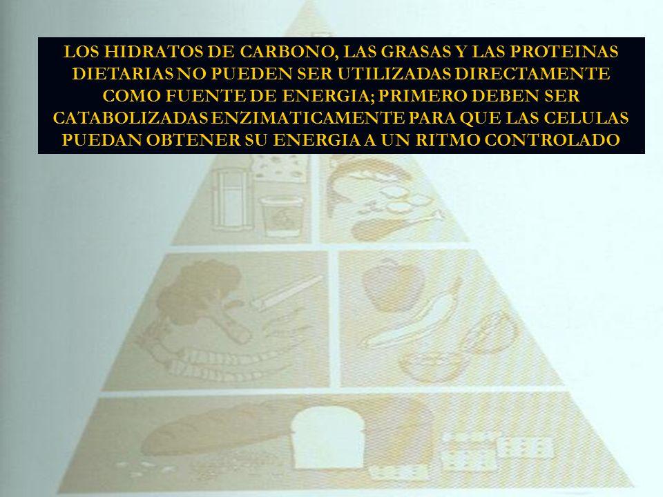 LOS HIDRATOS DE CARBONO, LAS GRASAS Y LAS PROTEINAS DIETARIAS NO PUEDEN SER UTILIZADAS DIRECTAMENTE COMO FUENTE DE ENERGIA; PRIMERO DEBEN SER CATABOLIZADAS ENZIMATICAMENTE PARA QUE LAS CELULAS PUEDAN OBTENER SU ENERGIA A UN RITMO CONTROLADO