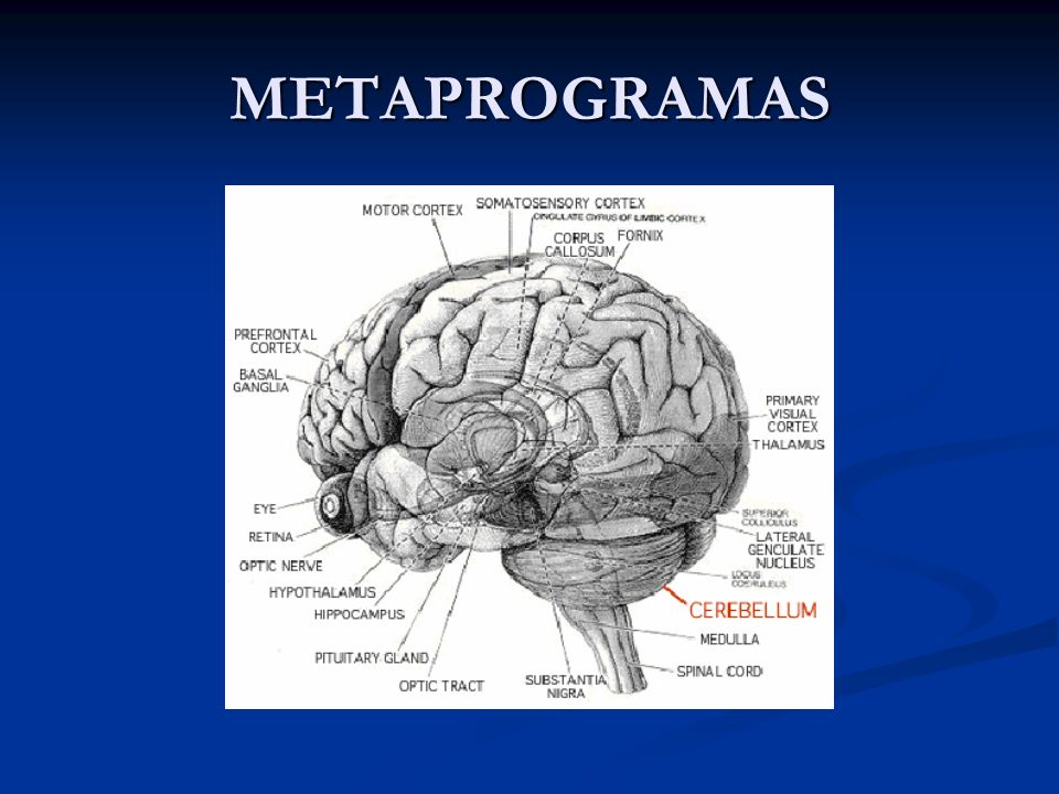 METAPROGRAMAS