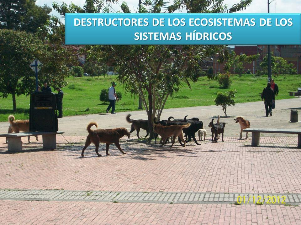 DESTRUCTORES DE LOS ECOSISTEMAS DE LOS SISTEMAS HÍDRICOS