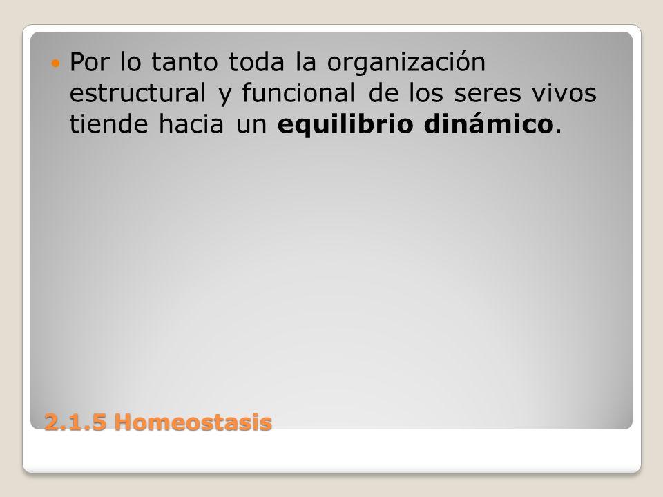 Por lo tanto toda la organización estructural y funcional de los seres vivos tiende hacia un equilibrio dinámico.