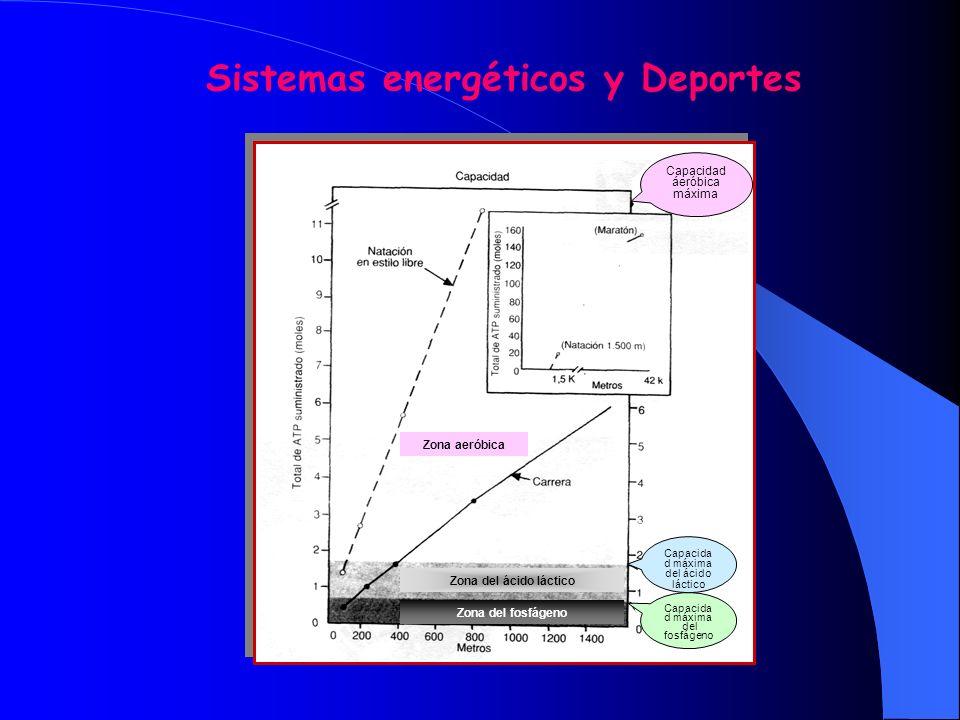 Sistemas energéticos y Deportes
