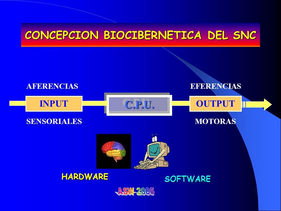CONCEPCION BIOCIBERNETICA DEL SNC