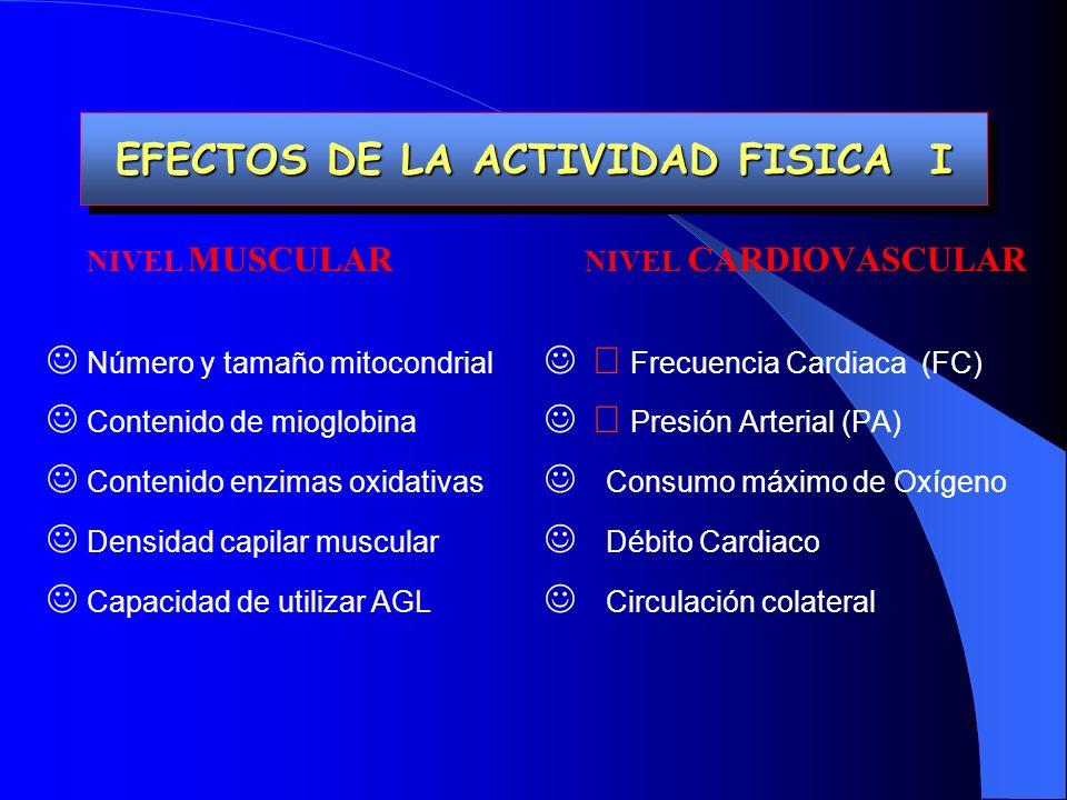 EFECTOS DE LA ACTIVIDAD FISICA I