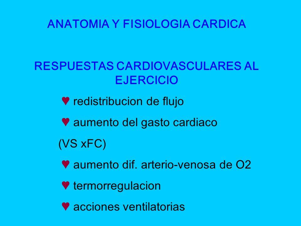 ANATOMIA Y FISIOLOGIA CARDICA RESPUESTAS CARDIOVASCULARES AL EJERCICIO