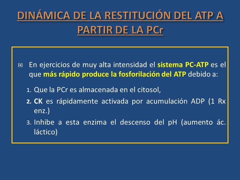 DINÁMICA DE LA RESTITUCIÓN DEL ATP A PARTIR DE LA PCr