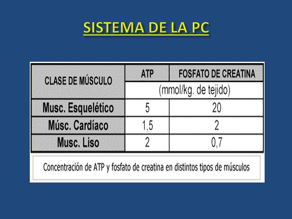 SISTEMA DE LA PC