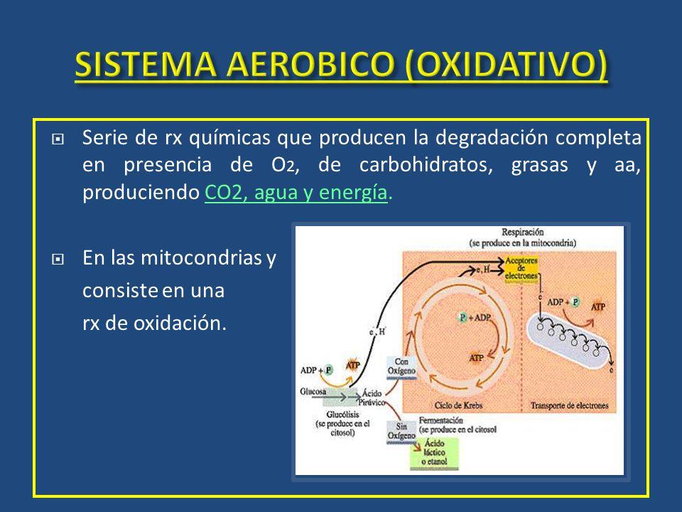 SISTEMA AEROBICO (OXIDATIVO)
