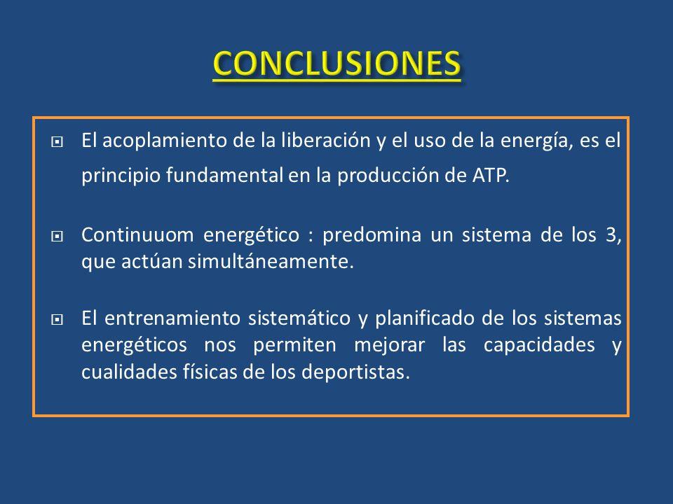 CONCLUSIONES El acoplamiento de la liberación y el uso de la energía, es el principio fundamental en la producción de ATP.