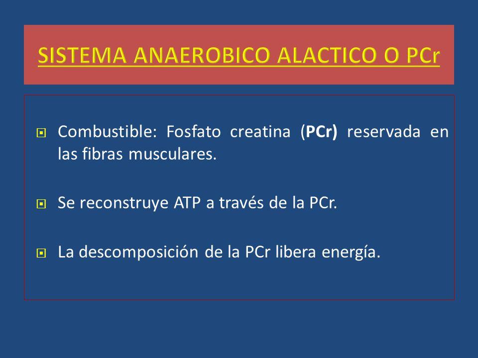 SISTEMA ANAEROBICO ALACTICO O PCr